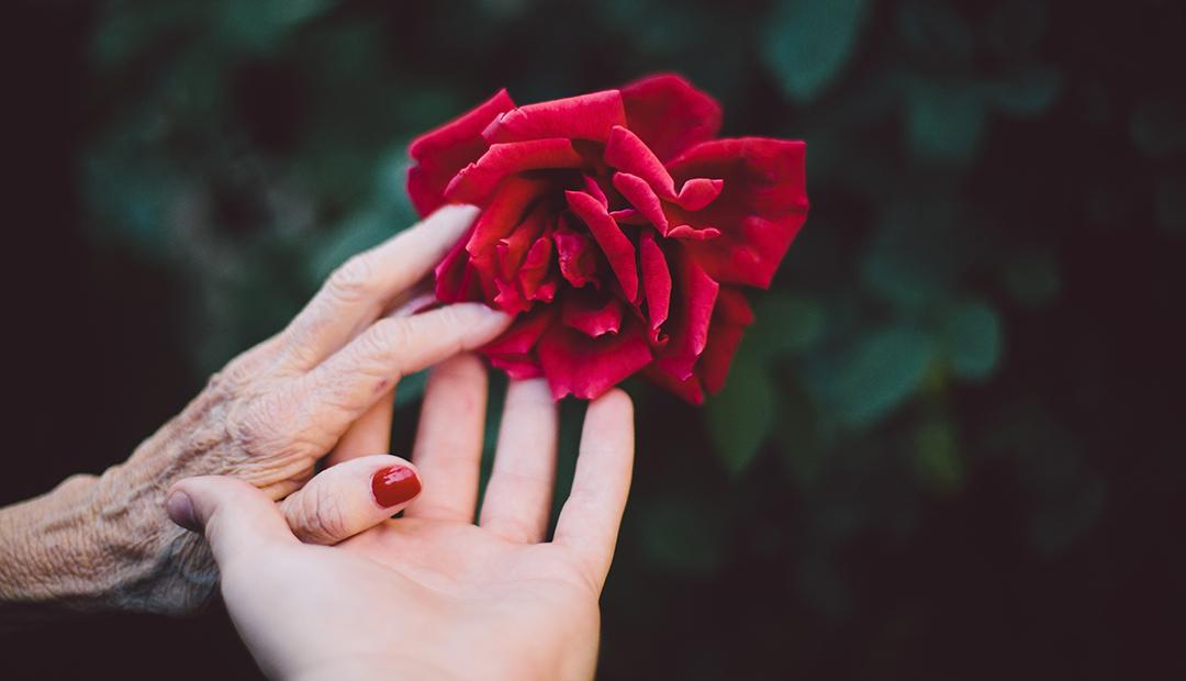 Rose hand med